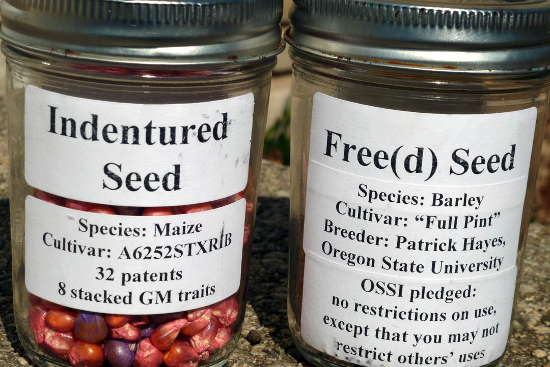 open source seed initiative