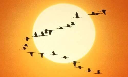 Formación garantiza la Migración a SwL